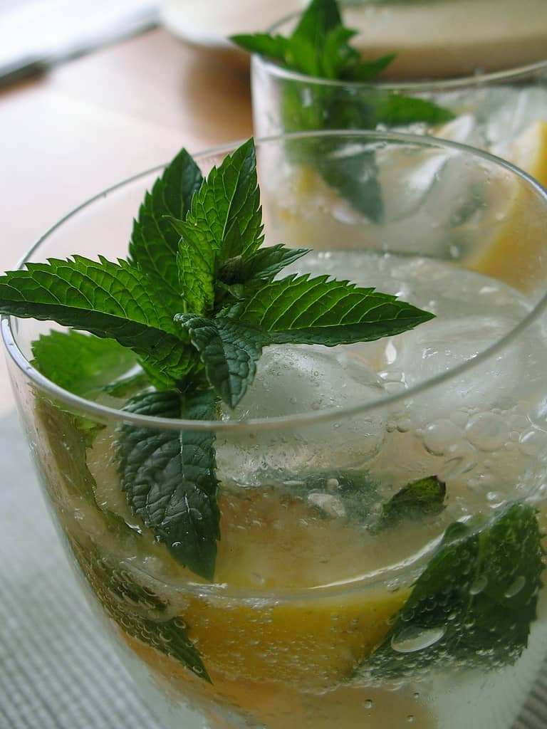 When Life Hands You Mint… – Grapefruit Mojitos